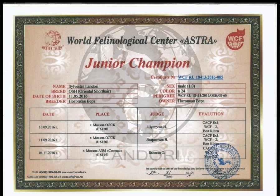 Junior Champion