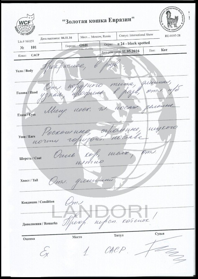 diplomas_silvester_landori_4