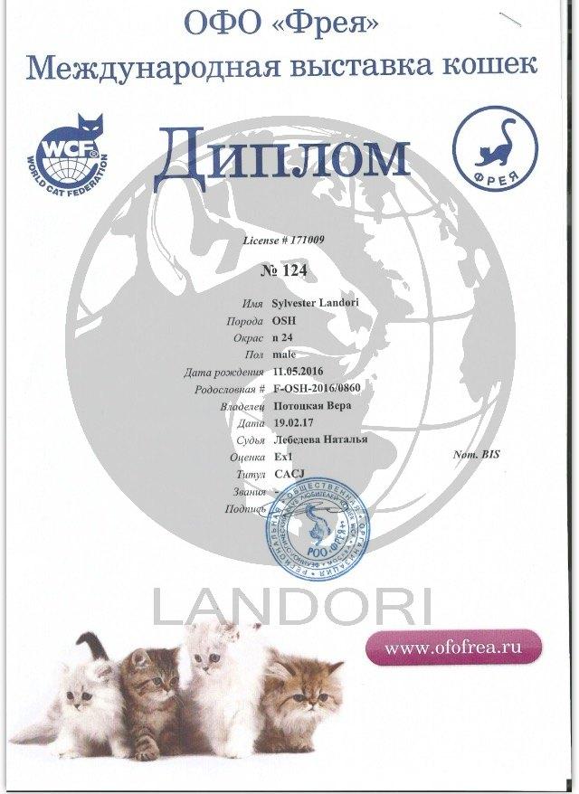 diplomas_silvester_landori_7